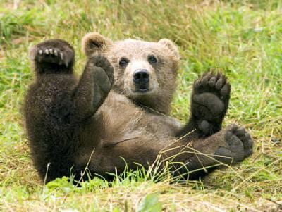Секс рассказы бурый медведь фото 796-607